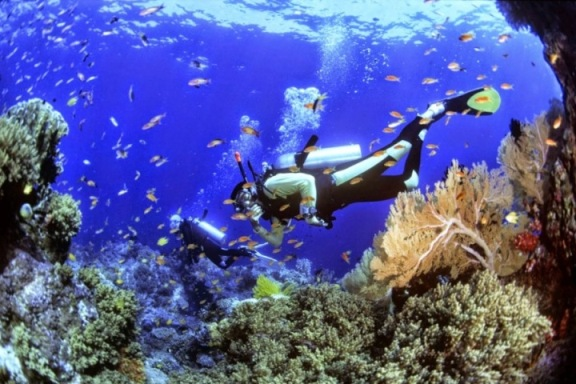Dimana Menyelam (Diving) Terbaik di Indonesia yang Diakui Dunia