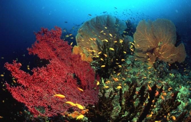 Tempat Eksotis Pulau Weh Aceh Sumatera yang Layak Anda Nikmati
