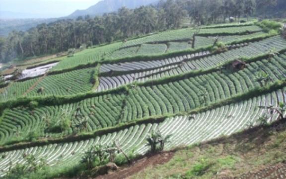 Ladang di lereng gunung