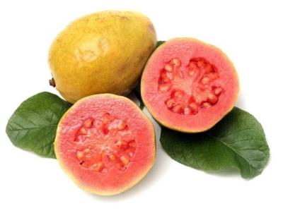 buah-jambu-biji