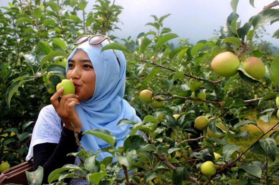 makan-buah-apel-juragancipircom