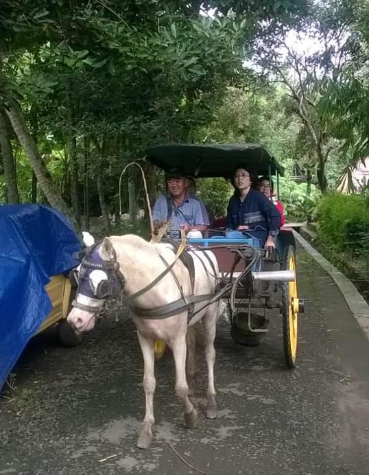 Dokar_Borobudur_20180215