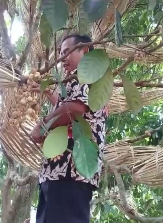 Bupati Purbalingga memanen duku brongsong 2018-03-03