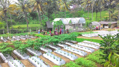 Kebun Cimory Bawen