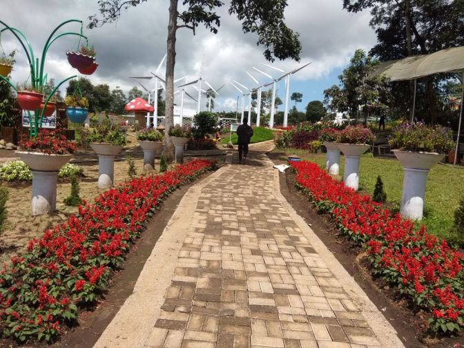 Bunga dari Belahan Dunia Menghiasi Taman Bunga Celosia Bandungan