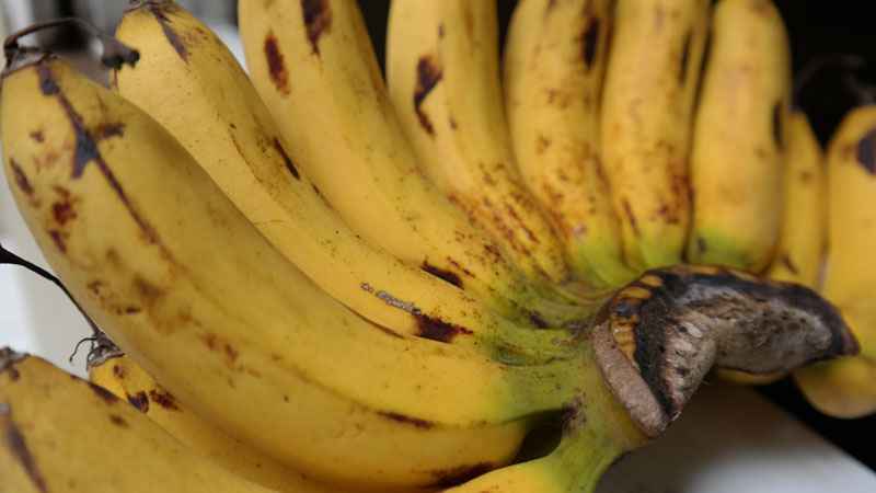 buah-pisang-Barangan