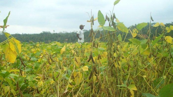 petani-kedelai_20171114_005859