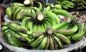 pisang ambon lumut