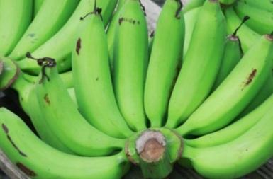 pisang-hijau