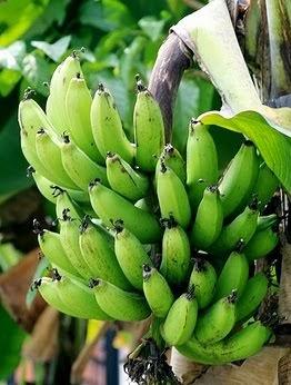 pisang ijo