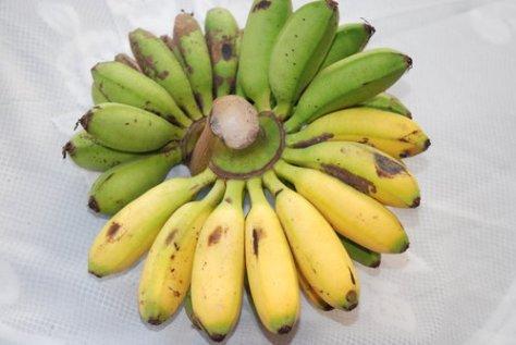 pisang-mas-belum-matang-serempak-7
