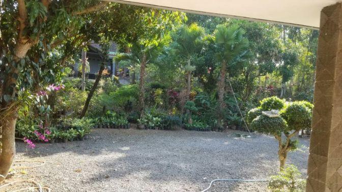 Aneka Bunga Tersedia di Kebun Bunga Bonsai Marsudi Tawangsari Teras