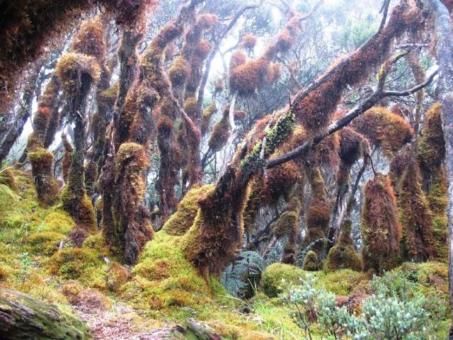 hutan-latimojong