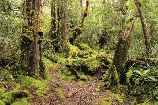 hutan-lumut-latimojong