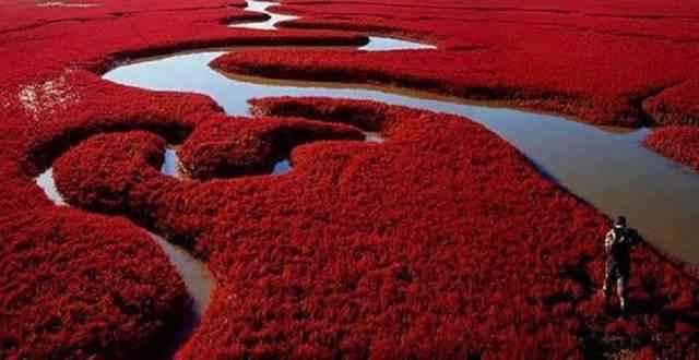 the-red-beach-delta-sungai-51bfef3bda775_51bfef3bdc1d1