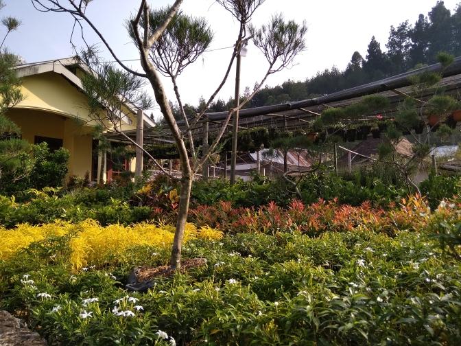 Nurul Gallery Tanaman Hias dan Bunga, Tawangmangu