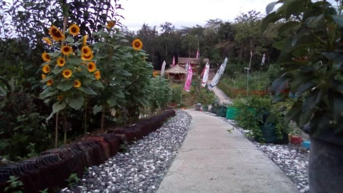Camp Bell 2 (mBiloro) Edupark Desa Tawangsari Teras Semakin Banyak Pengunjung