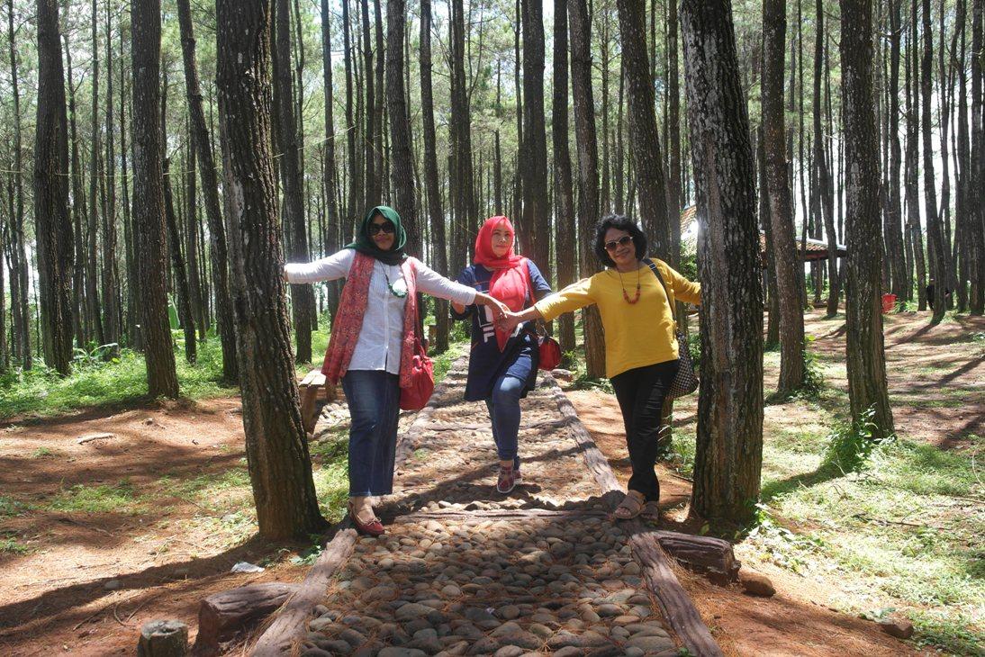 Puncak Becici Hutan Pinus Geowisata Dengan Pemandangan Kota